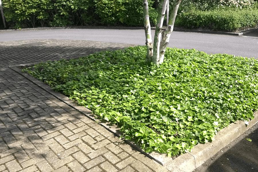 case-plant-scheme-cs