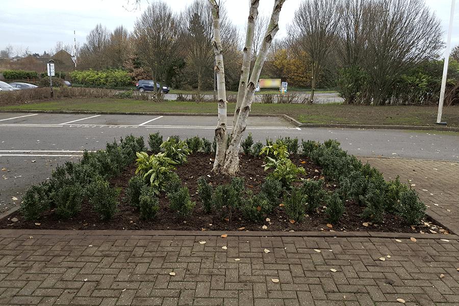 landscaping-planting-scheme-three-cs