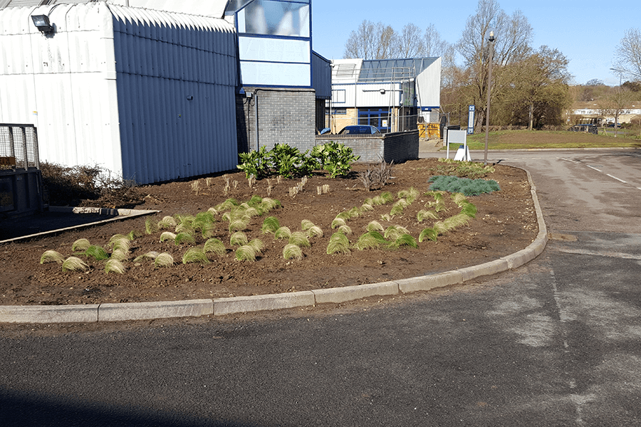 stacey-landscape-plants