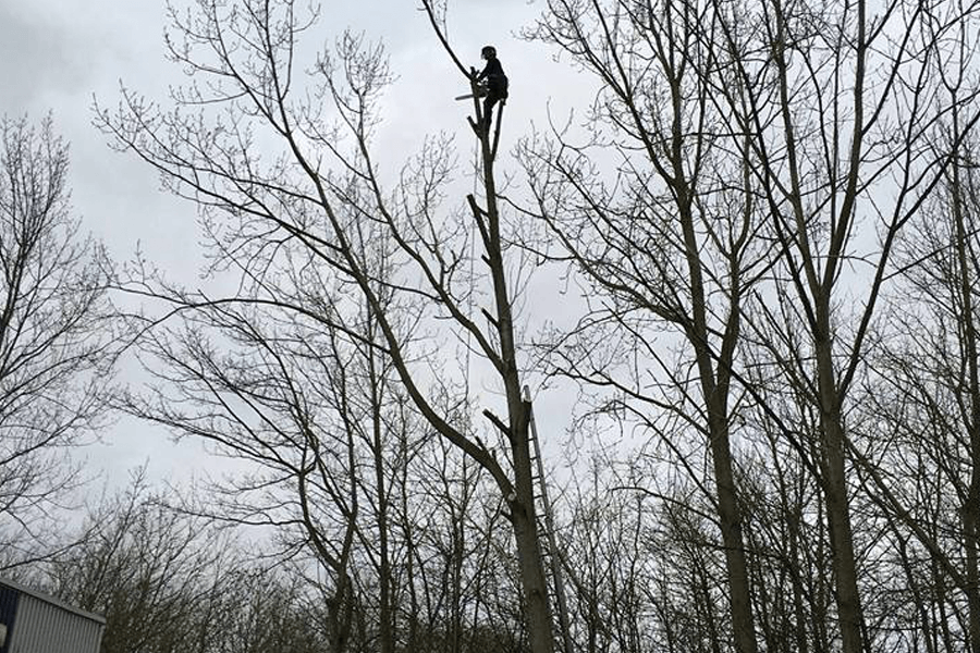 tree-surgery-cs-wrk-two