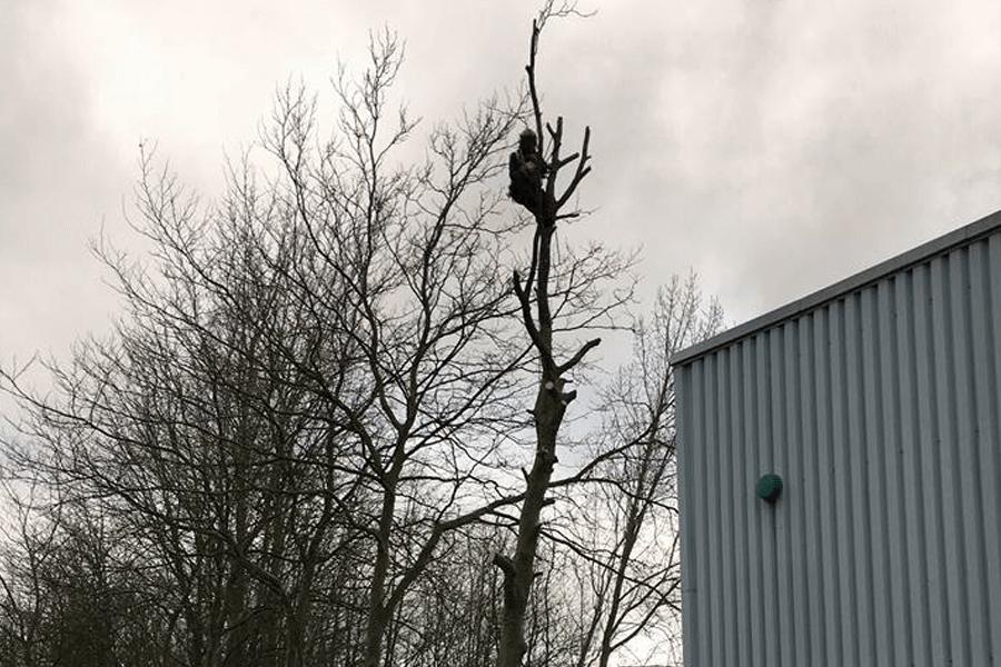 tree-surgery-three-cs