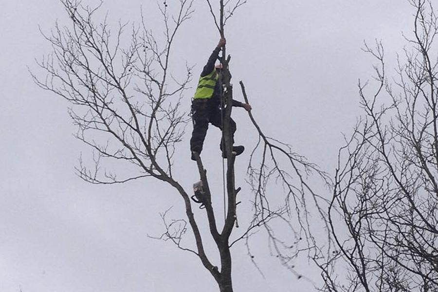 tree-surgery-three-neal