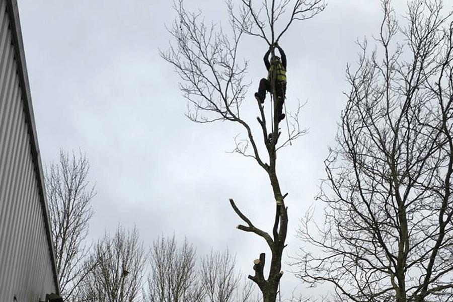 tree-surgery-three-nl-cs