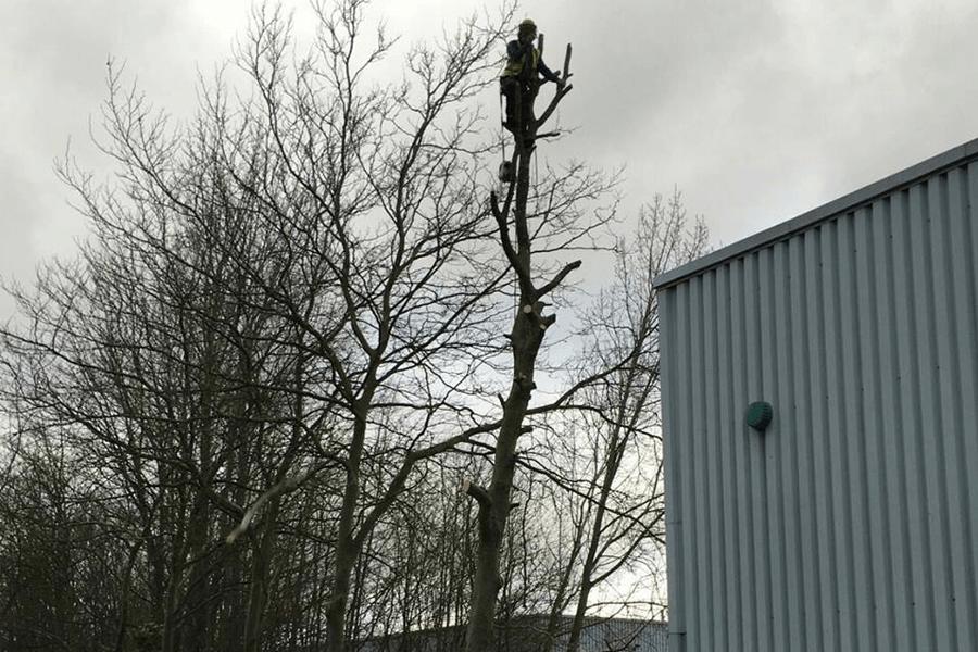 tree-surgery-three-nl