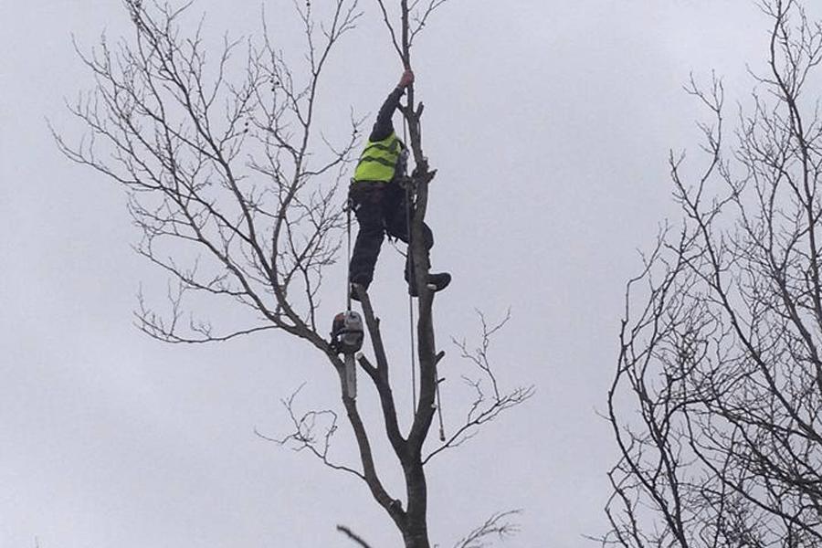tree-surgery-three-nlands