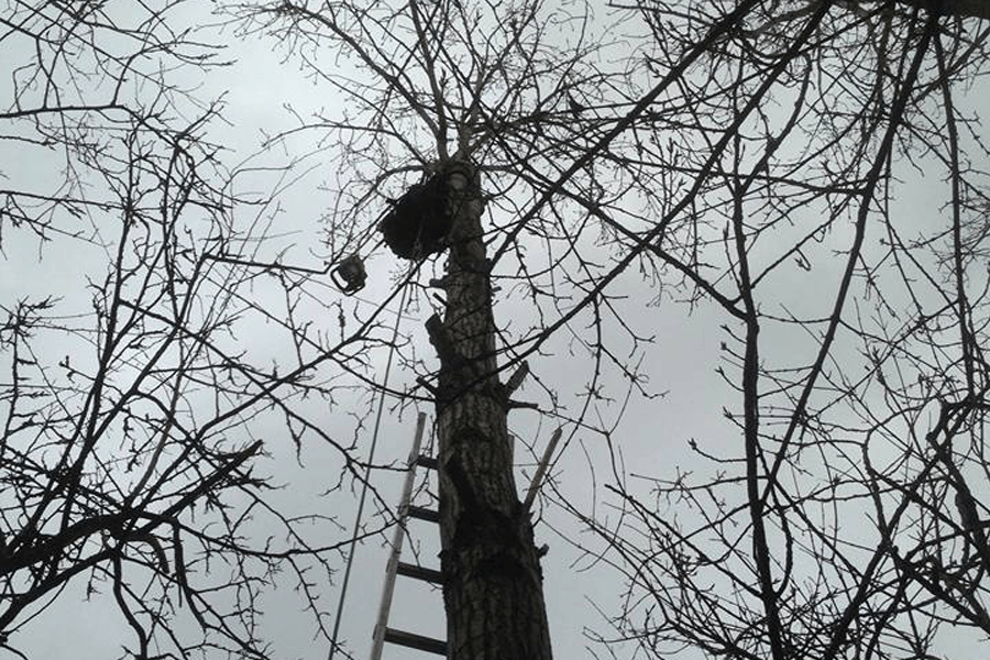 tree-surgery-two-cas