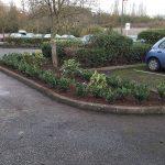Planting Scheme - After