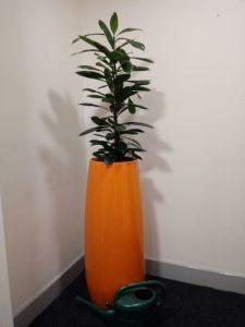 Dark Green Leaves Office Plants