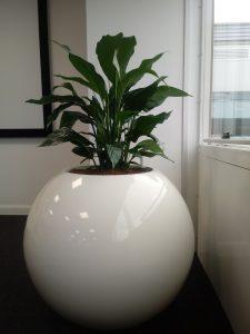 Green Big Leaves Office Plants
