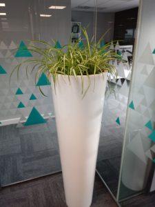 Green Leaves Office Plants