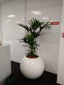 Green Long Leaves Office Plants