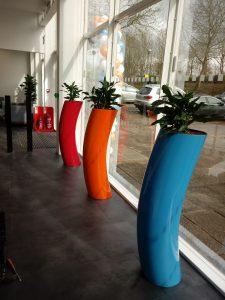 Multiple Office Plants