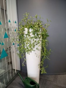 Nice Office Plants