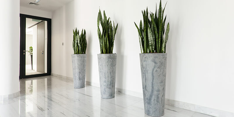 Office Planting In Hallway