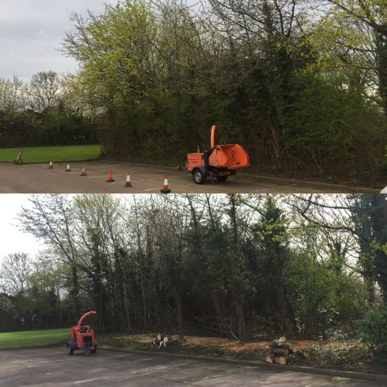 Tree Surgery Before and After