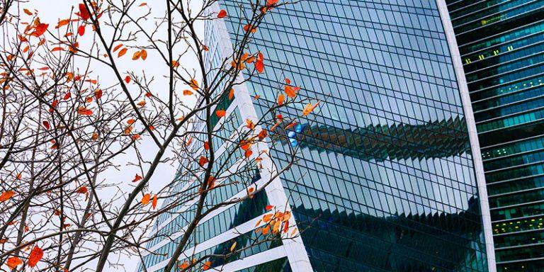 Autumn tree outside office