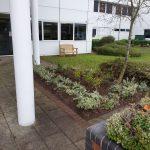 Planting Scheme in Central Milton Keynes