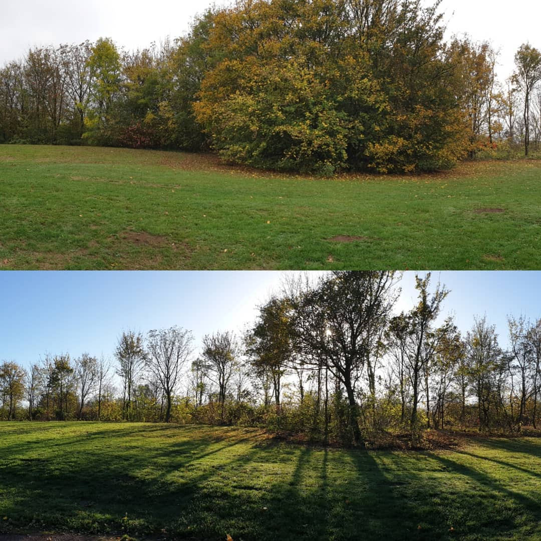 The Parks Trust Thinning Work