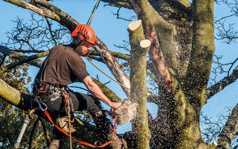 tree surgeon cutting down tree