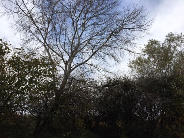 Tree Removal Due To Fungal Infection