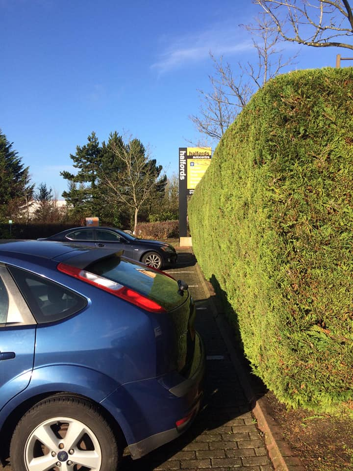 Conifer Maintenance in Winterhill
