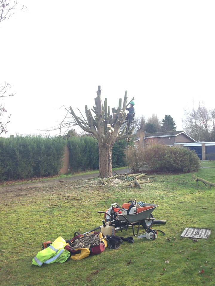 Tree Removal in Woughton On The Green