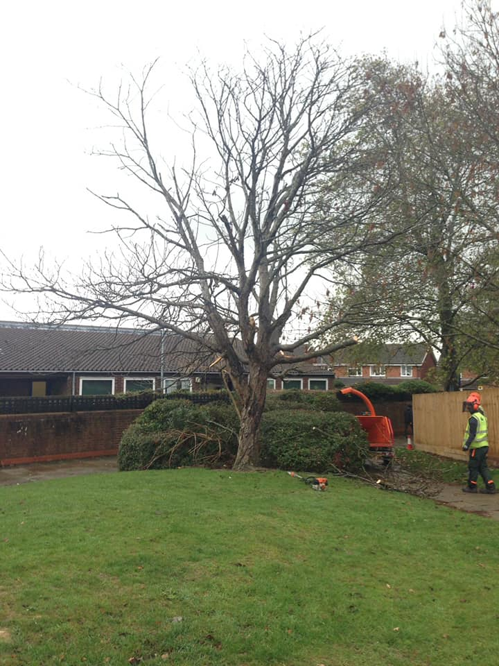 newport pagnell tree removal