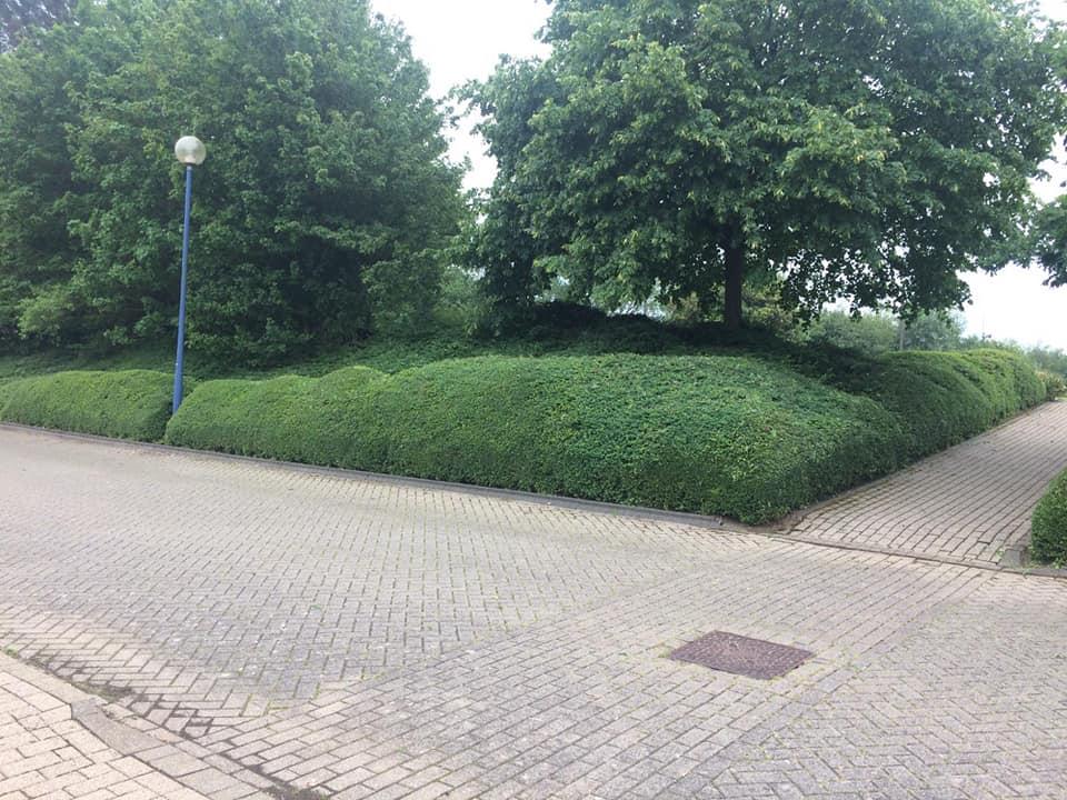 Trimmed-bushes