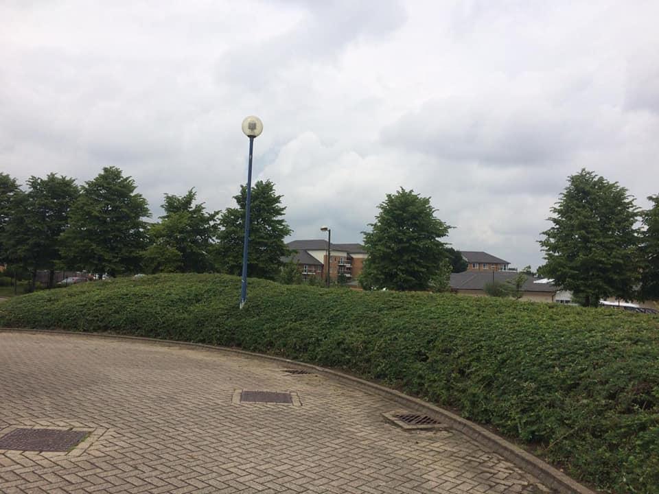 car-park-bushes