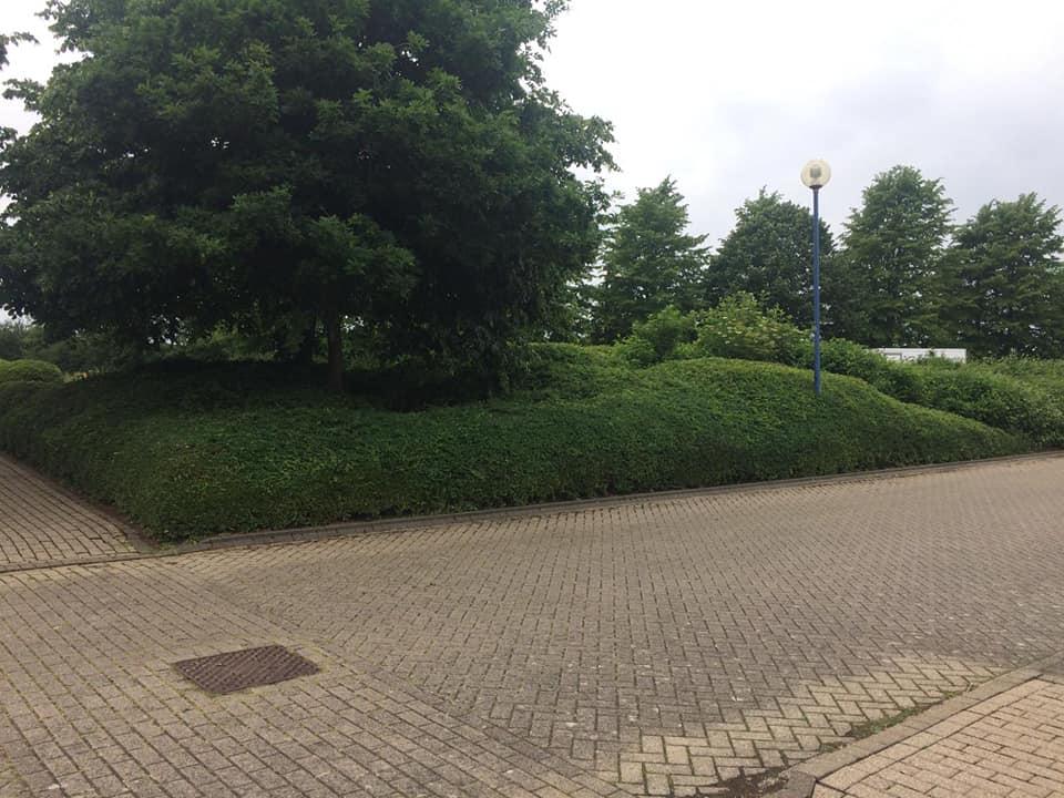 park-trust-bush-car-park