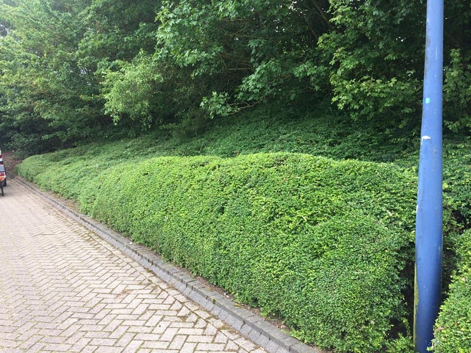 park-trust-bushes