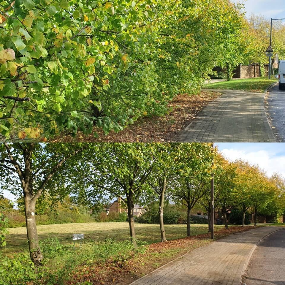 before and after tree work
