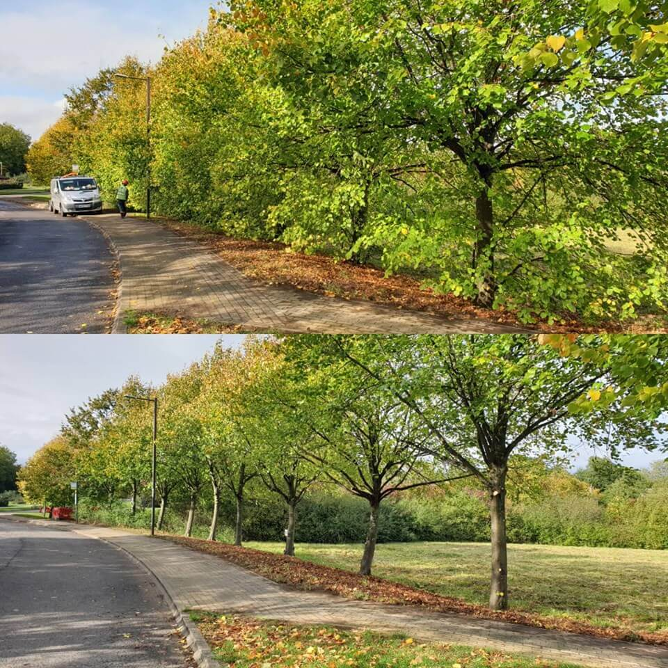 tree work before and after