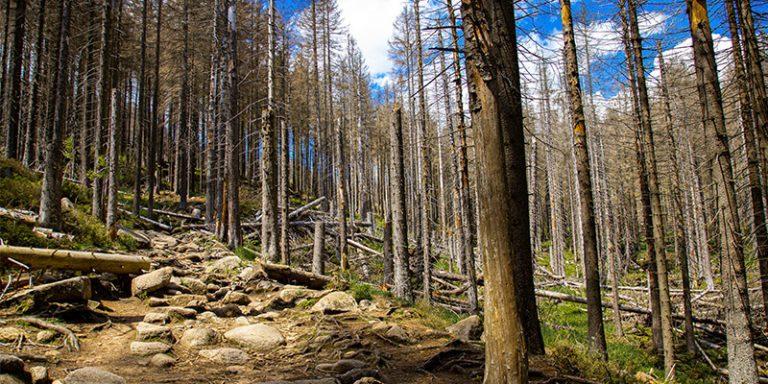 Wiltering Trees