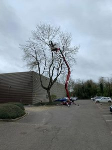 Progress On Tree Surgery