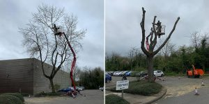 Tree Surgery Before & After