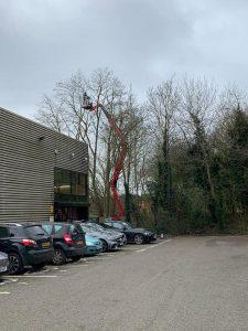 Tree Surgery In Carpark