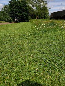 Buckinghamshire Grass Cut