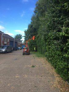 Using Tractor To Cut Bush