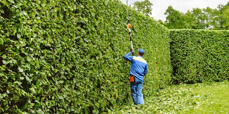 Landscaping Bush