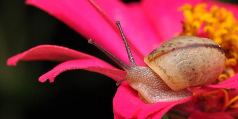 Slug On Flower