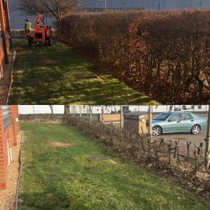 Cutting Down Hedges