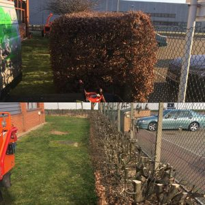Hedges Before and After