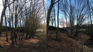 Tree Thinning For The Parks Trust